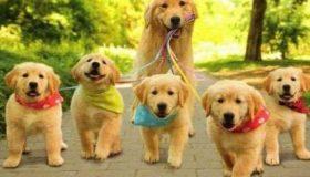 Corso di Animal Care Torino