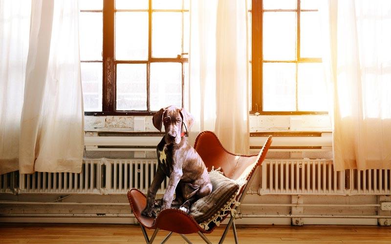 Cosa devi sapere per diventare un toelettatore per cani a domicilio