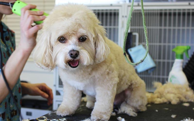 L'equipaggiamento indispensabile per un perfetto toelettatore per cani a domicilio